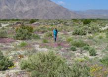 Desert Wildflower Tours