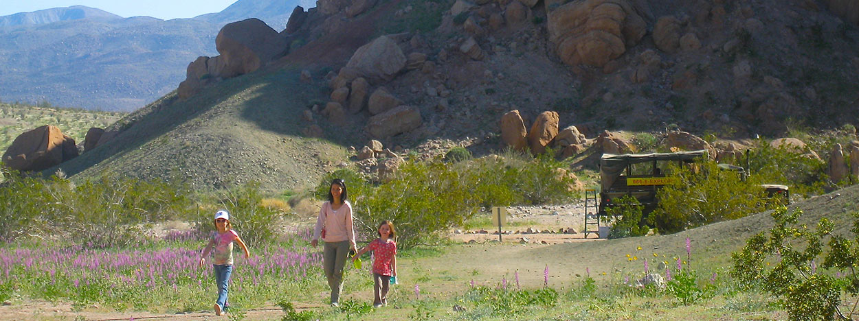 https://www.californiaoverland.com/wp-content/uploads/2012/09/family-desert-wildflower-tour-1250.jpg