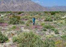 Wildflower or Wild-Terrain Tour